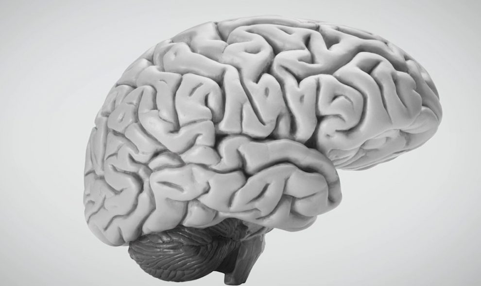JupiterFilms-cerveau-enfant_