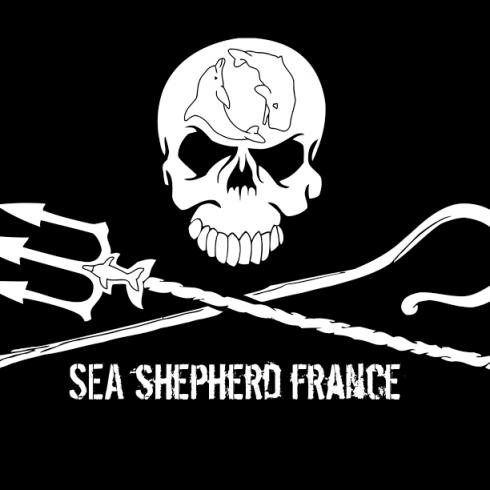 Opération Dolphin ByCatch pour stopper le massacre des dauphins par la pêche industrielle