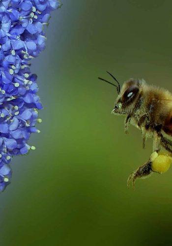 Promouvoir l'apiculture et la production d'Argan au Maroc avec Good Planet