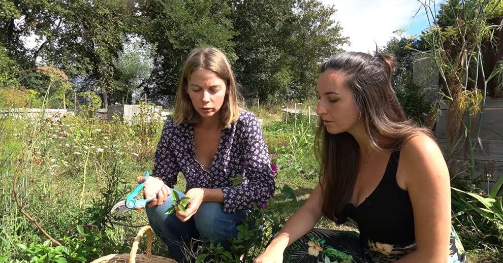 PrunelleDuMonde-plantes-fleurs-cultiver-manger