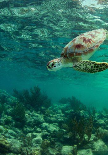 Opération Nyamba pour protéger les tortues marines du braconnage