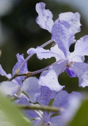 Guerlain s'est engagé à restaurer la terre des orchidées et ressusciter la forêt tropicale
