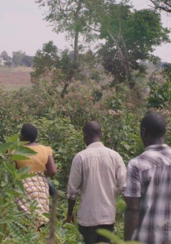 Avec Ecosia, découvrez comment la forêt a été préservée en Ouganda