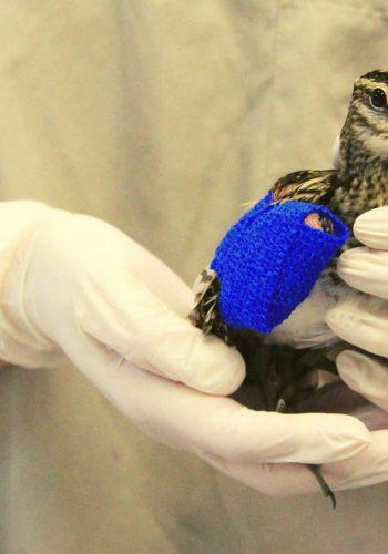 Soutenons les centres de sauvegarde de la faune sauvage LPO