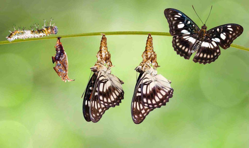 transformation écologique