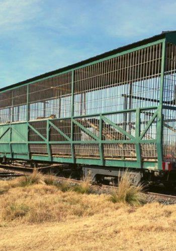 Opération de sauvetage de 4 tigres du Bengale enfermés dans un train depuis 2007.